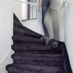 Vloerbedekking trap verwijderen kosten