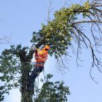 boom verwijderen kosten